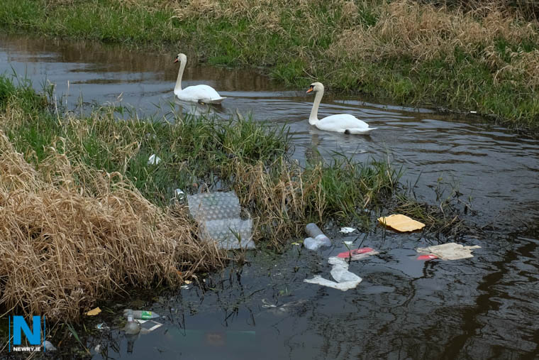 The clutter might be there on Newry Canal but the swans are still beautiful! Photograph: Columba O'Hare/ Newry.ie